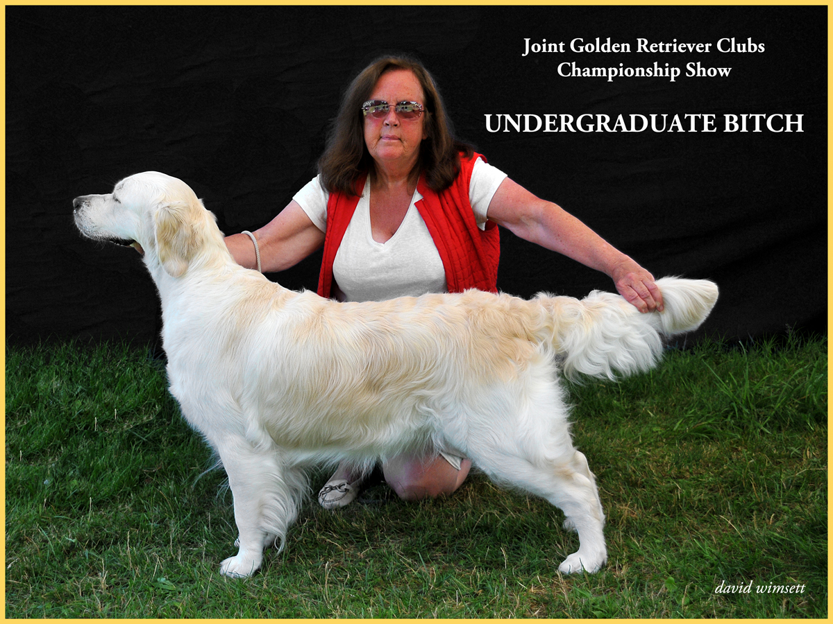 A person kneeling next to a dog Description automatically generated with medium confidence