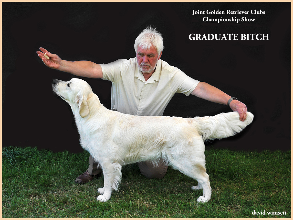 A picture containing text, grass, dog, person Description automatically generated