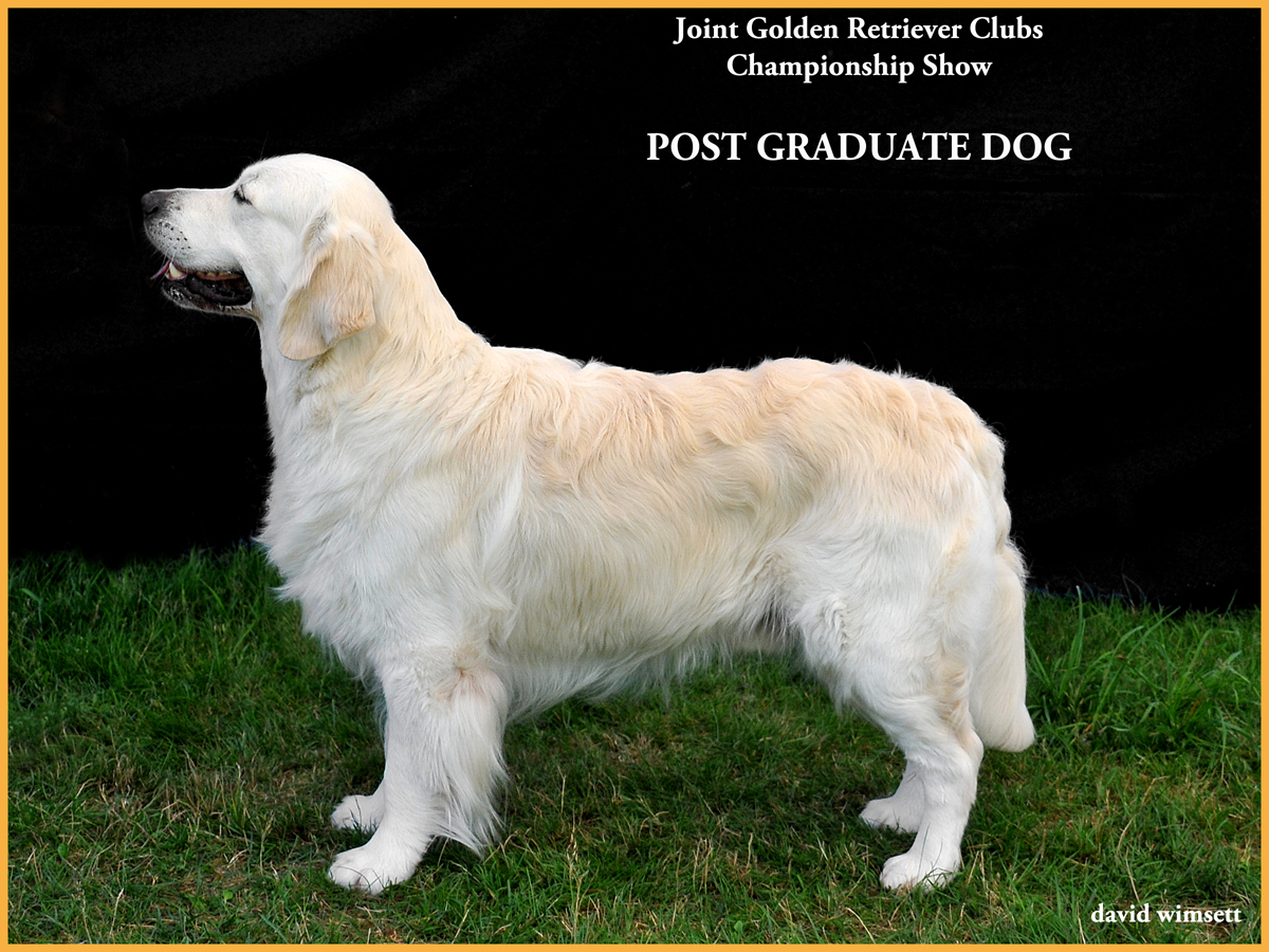 A picture containing text, grass, mammal, dog Description automatically generated