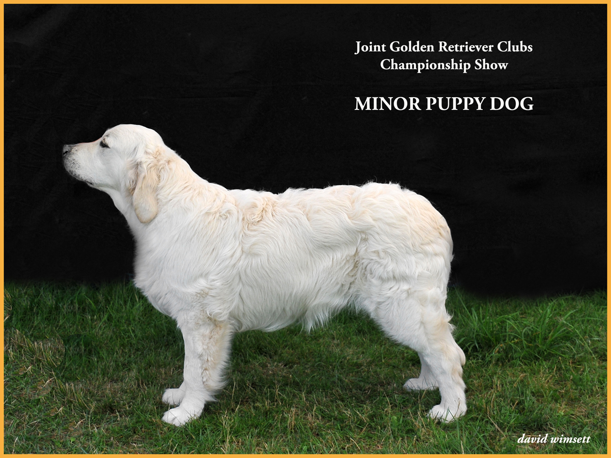 A white dog standing on grass Description automatically generated with low confidence