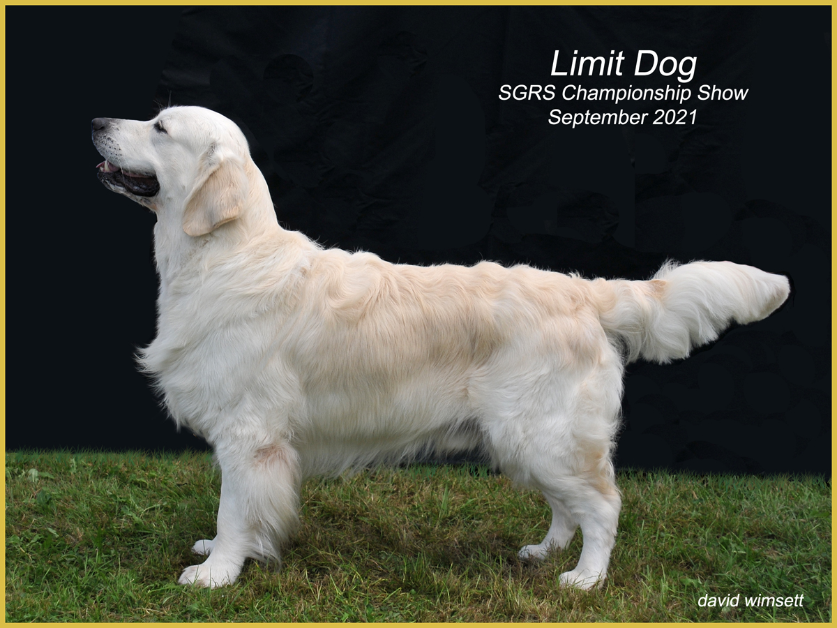 A dog standing on grass Description automatically generated with low confidence