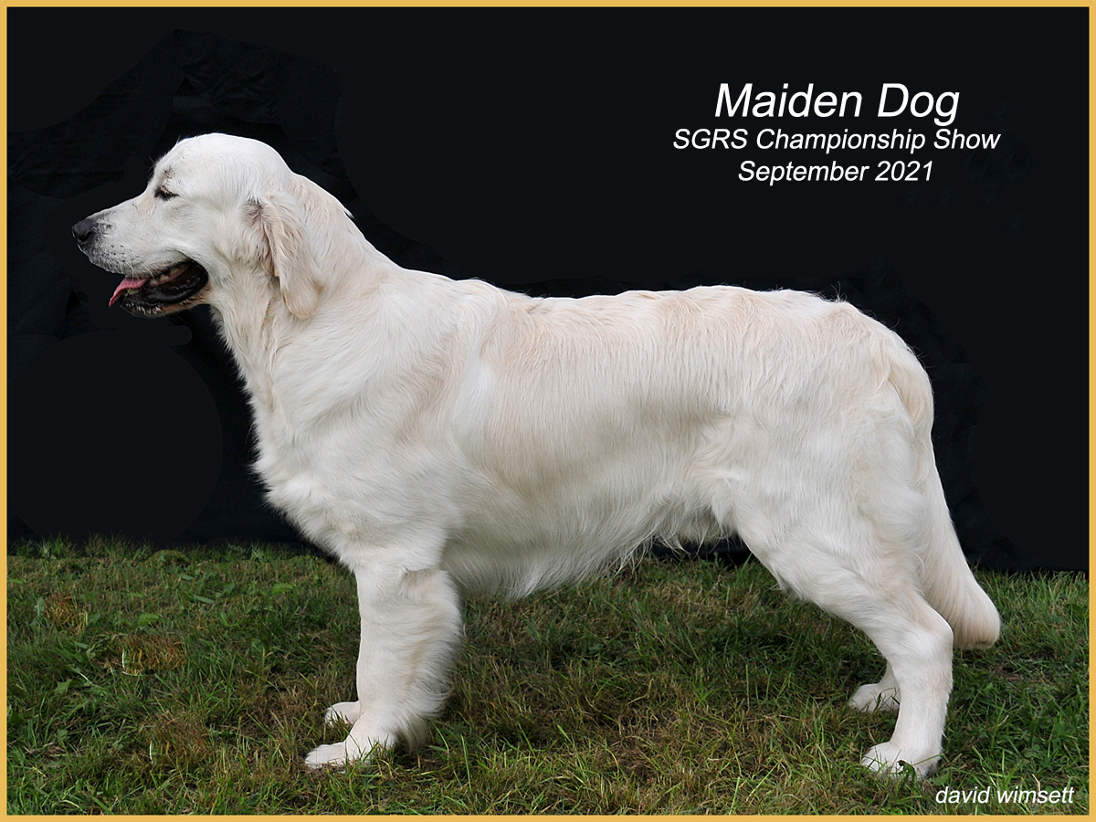 A white dog standing on grass Description automatically generated with medium confidence